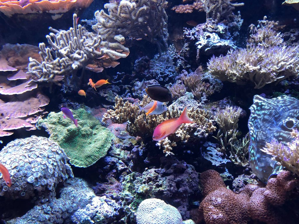 Seattle Aquarium tropical fish