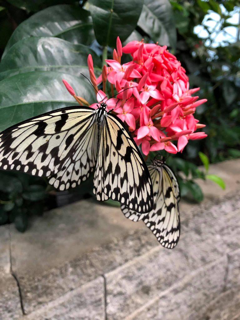 Pacific Science Center butterflies