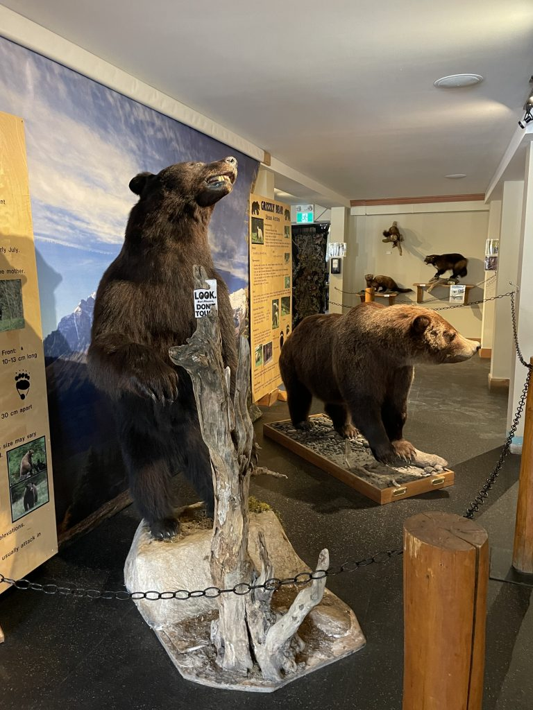 Wildlife Interpretive Centre Lake Louise